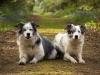 Dog location shoot Coalville
