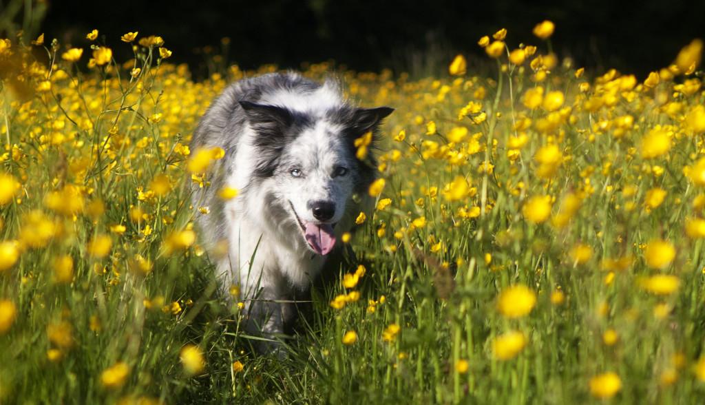 dog portrait in Whitwick